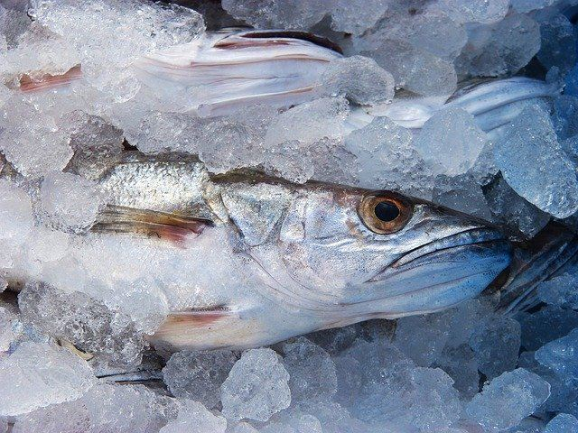 Quels poissons consommer vers Aix-en-Provence _